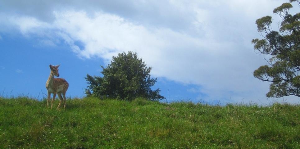 20111106-165137.jpg