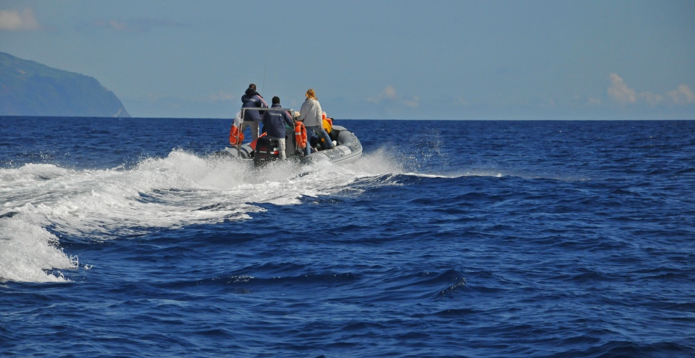 Whale Watching in the Azores (4/6)